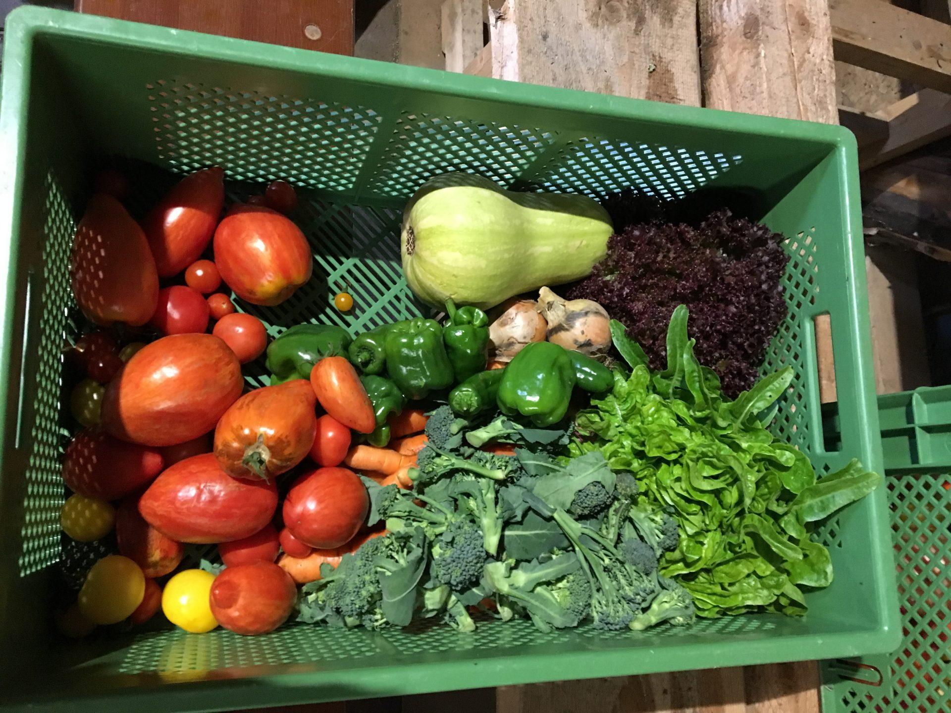 Leckere Bio Gemüsekiste
