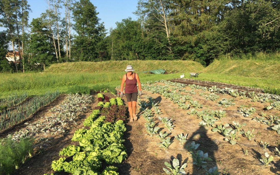 Darum wächst das Bio-Gemüse – Danke, Ute-Maria