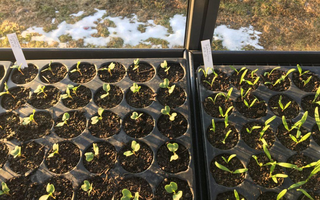 Das neue Gemüsejahr hat schon begonnen!
