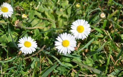 Was uns die Natur jetzt für eine Frühjahrskur schenkt…