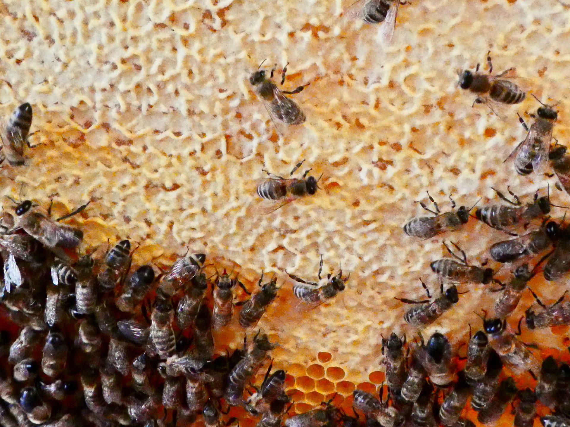 Honig schleudern: Jetzt kann es bald losgehen