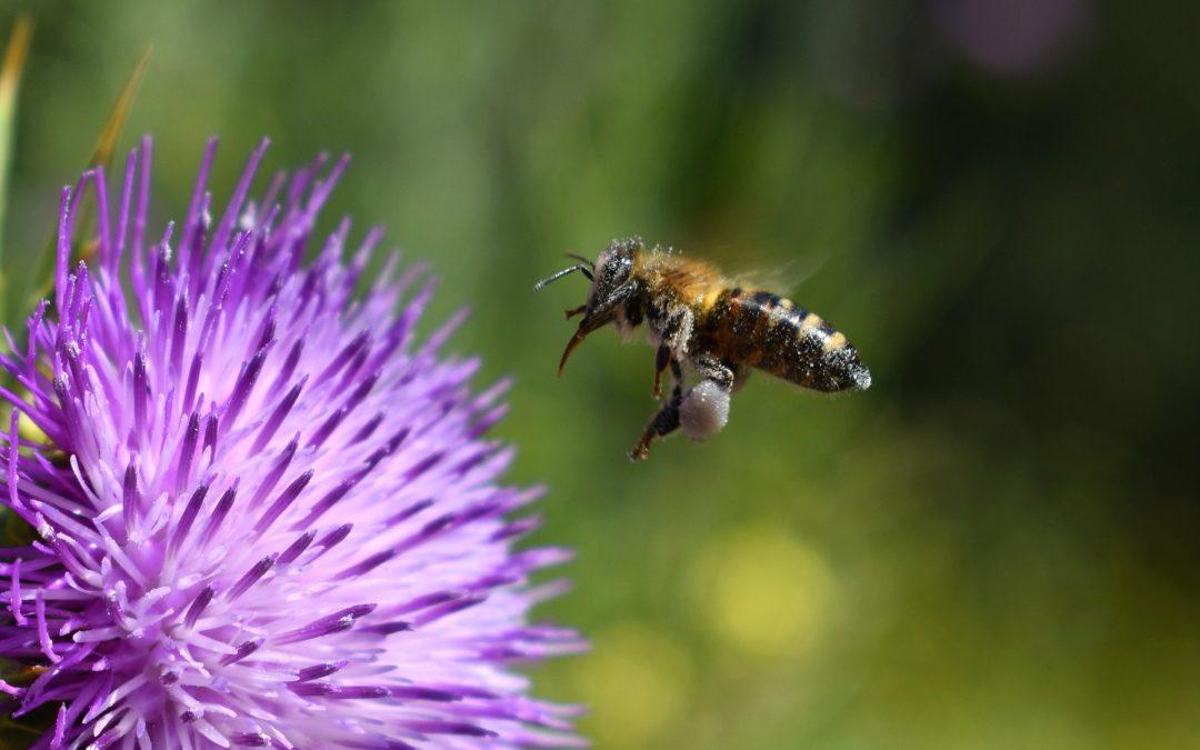Honig schleudern – ein süßes Stück Arbeit!