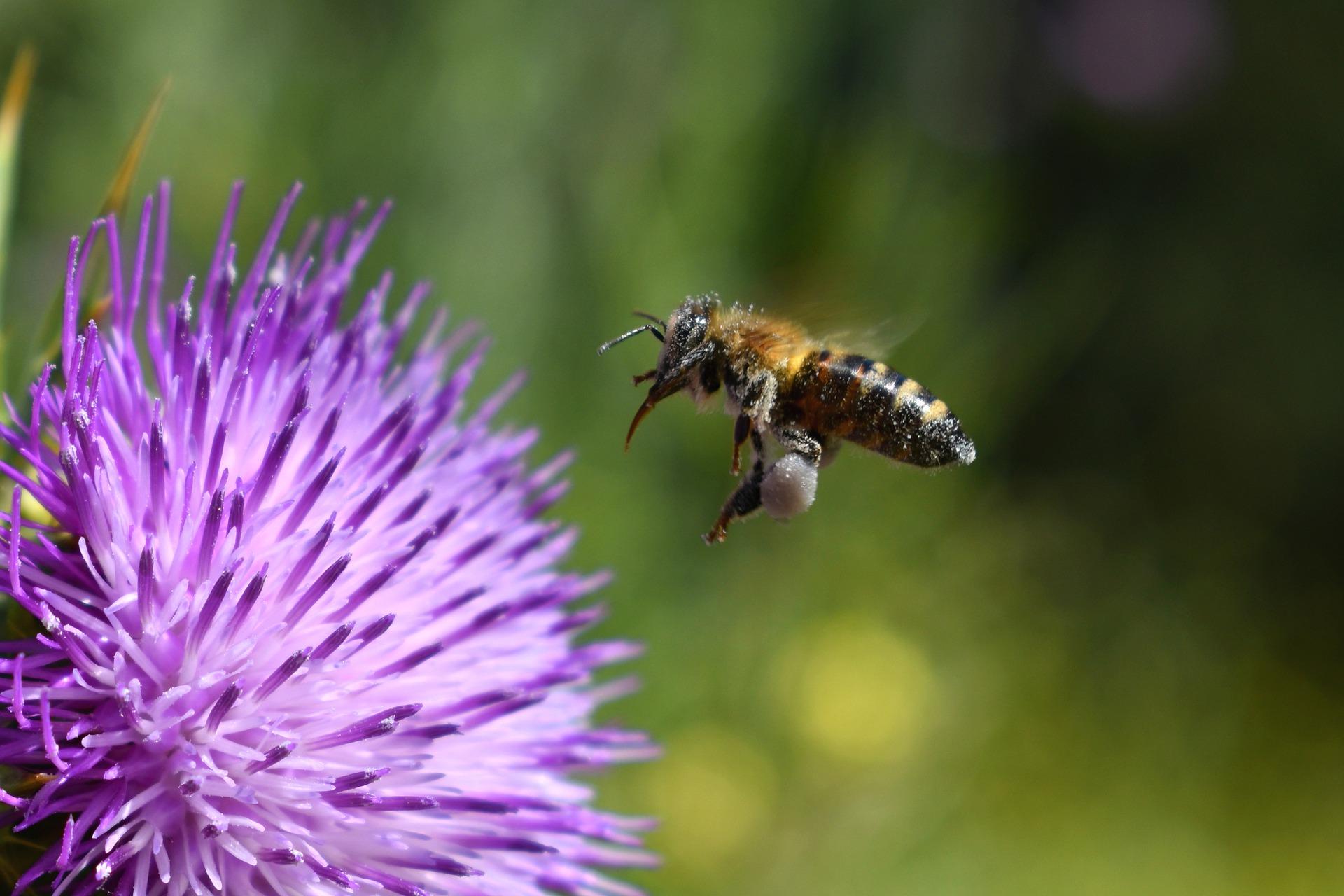 Honig schleudern: Die Frühjahrstracht ist eingebracht