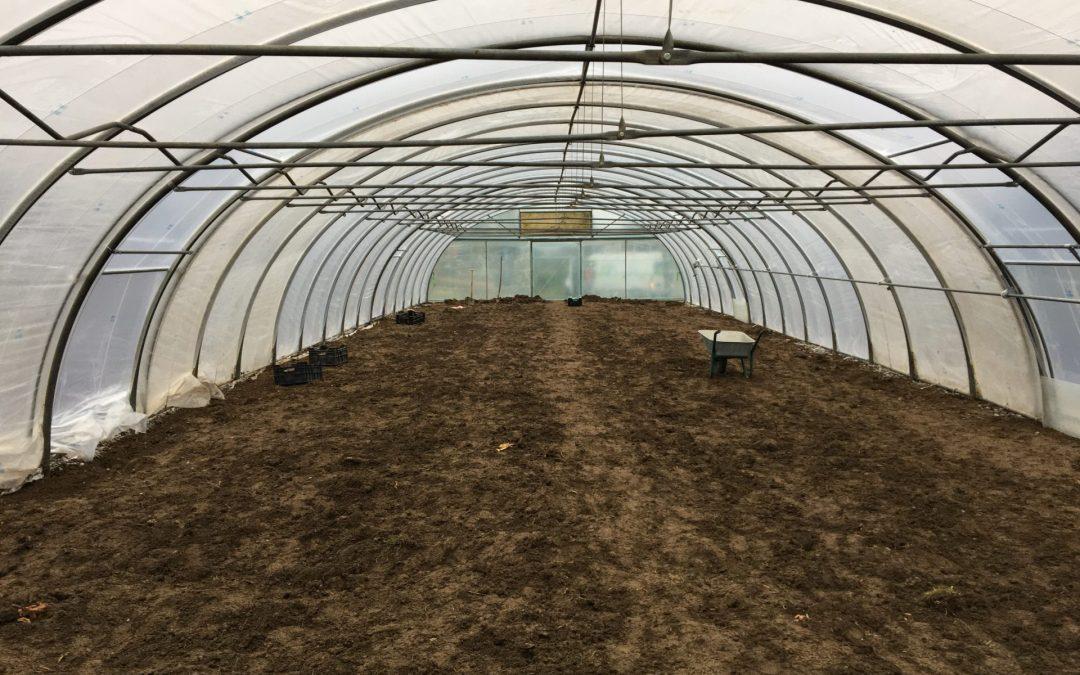 Jetzt auch Winter-Bio-Gemüse!