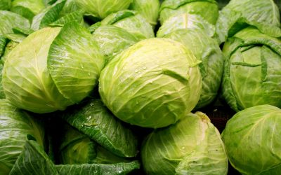 Weißkohl – hellgrün, aromatisch und wahnsinnig gesund!
