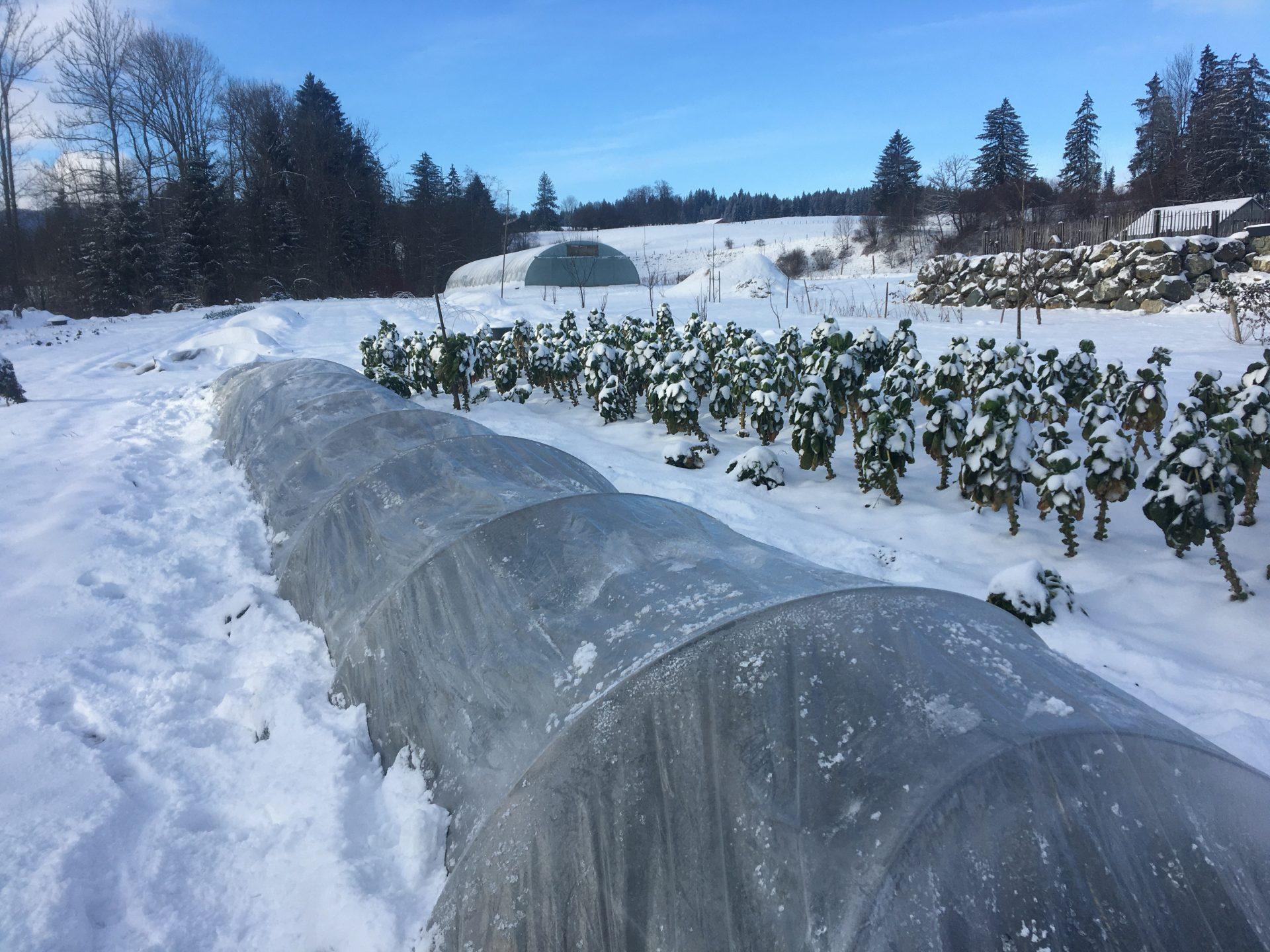 Winter-Bio-Gemüse