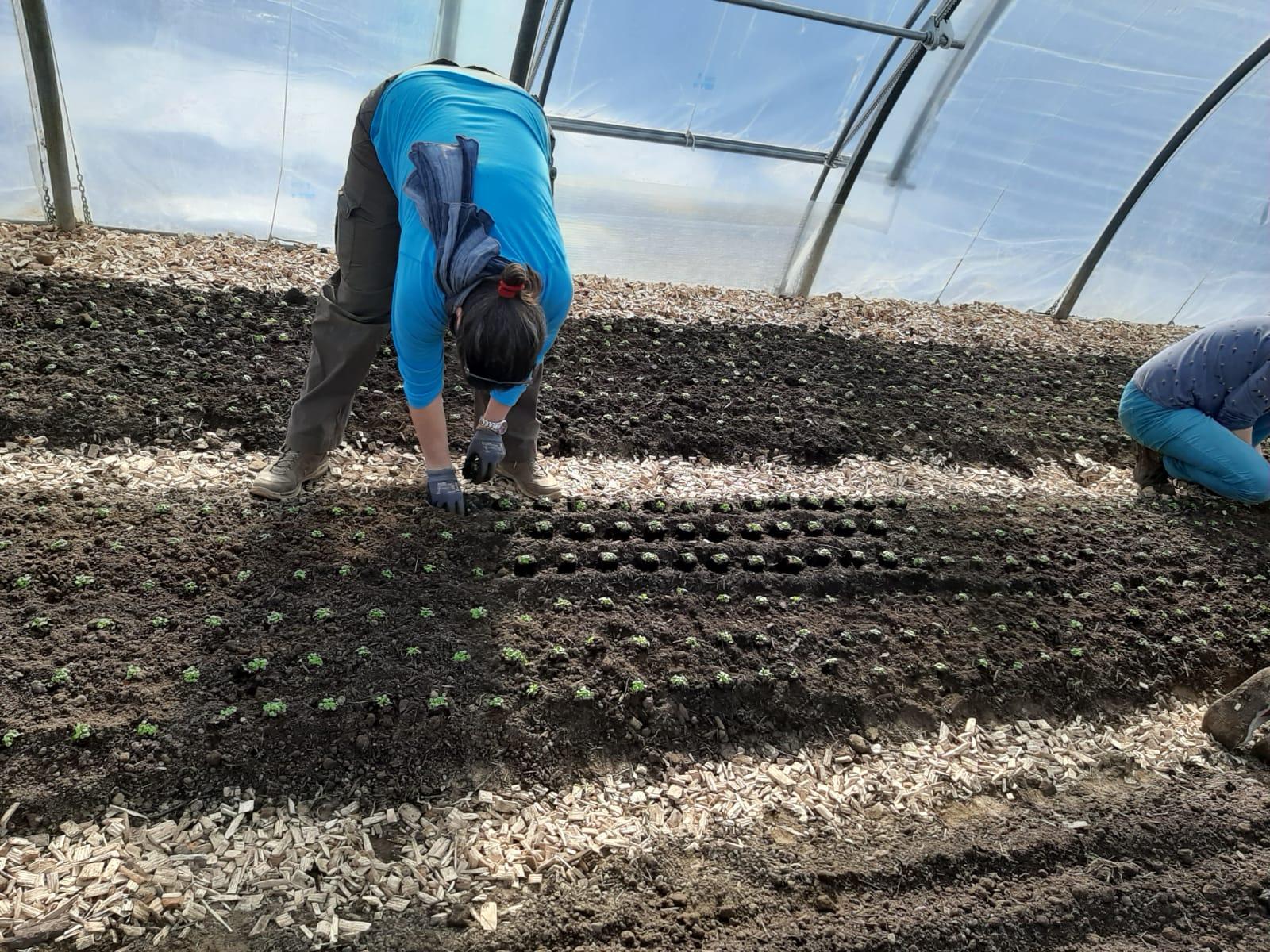 Anbau, Aussaat und Anpflanzaktion im Frühjahr