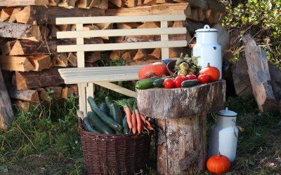 BIO-Gemüse voll im Trend